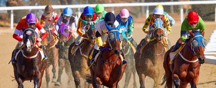 競馬-始め方-賭け方